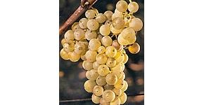 Vins Argentine
