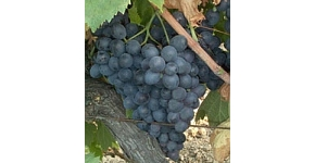 Mat. sèches, vin français