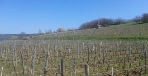 Bourgogne, vin français